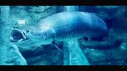 Tennessee Aquarium Arapaima