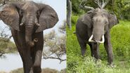 The Difference Between Mammoths and Elephants