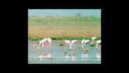 The Flamingos' Wetland Habitat