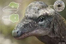Triopticus-updated.jpg