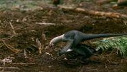 BBC.Prehistoric.Park.3of6.Dinobirds.XviD.AC3.6ch.MVGForum.avi snapshot 20.49 -2016.10.08 18.36.28-