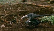 BBC.Prehistoric.Park.3of6.Dinobirds.XviD.AC3.6ch.MVGForum.avi snapshot 20.49 -2016.10.08 18.36.28-.jpg