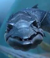 Barracuda-1-a-turtles-tale-2-sammys-great-escape-4.65