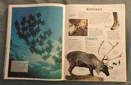 DK Encyclopedia Of Animals (137)
