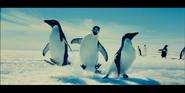 Oceans 2010 Adélie Penguins