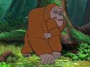 Rileys Adventures Gigantopithecus