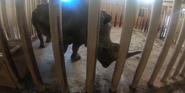 Rolling Hills Zoo Rhino