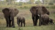 5 Facts about Elephants