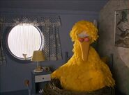 Big Bird sleeping in the Dodos' house
