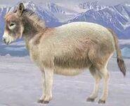 Donkey switch zoo