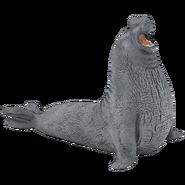 Elephant Seal Transparent
