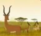 Kirikou Impala