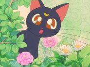 Luna Suspicious