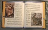 Scholastic Encyclopedia Of Animals (41)