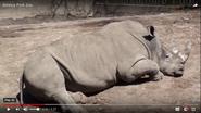 Seneca Park Zoo Rhino