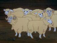 Sheep SR