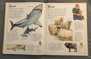 The Kingfisher First Animal Encyclopedia (63)