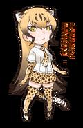 12 Cheetah