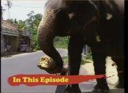 BTJG Sri Lankan Elephant