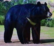 Formosan Black Bear ZTX