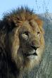 Lion LG