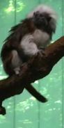 Milwaukee County Zoo Tamarin