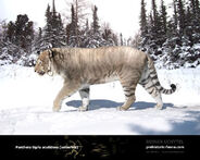 Panthera tigris acutidens