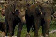 Evan Almighty Elephants