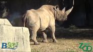 Milwaukee County Zoo South Central Black Rhino