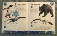 Polar Animals Dictionary (9)