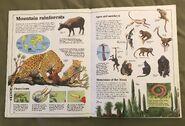 Usborne World Wildlife- Mountain Wildlife (5)