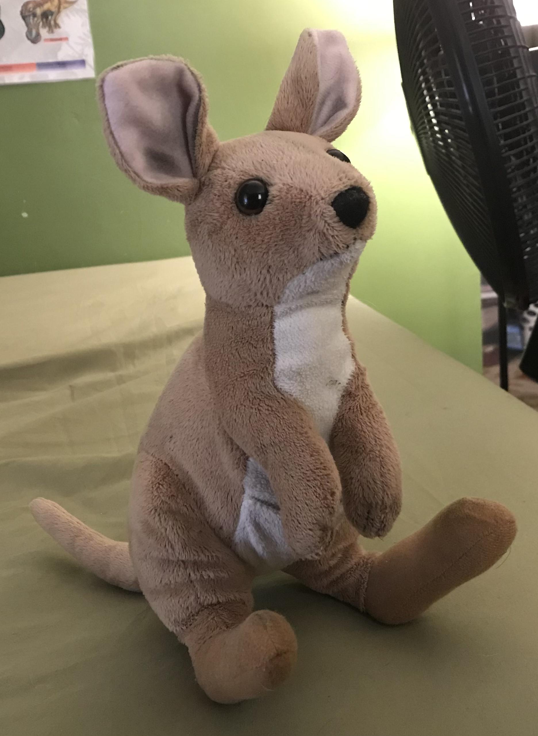Agile Wallaby