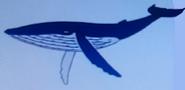 Batw-animal encyclopedia-humpback-whale