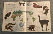 DK Encyclopedia Of Animals (17)