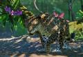 Jaguar-planet-zoo