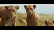 The Legend of Tarzan Lions