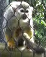 Zoo Miami Monkey02
