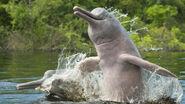 Amazon-dolphins-drones-25bd8507