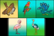 Birds erinv