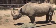 Columbus Zoo Rhino