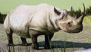 Eastern Black Rhinoceros ZTX