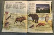 Macmillan Animal Encyclopedia for Children (6)