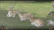 Six Flags Deer