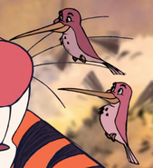TTM Hummingbirds