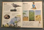 The Kingfisher First Animal Encyclopedia (33)