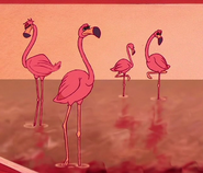 Aladdin Flamingos