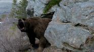Cave bear roaring at screen 01 PP