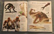 DK Encyclopedia Of Animals (117)