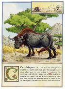 Dbs Jonathan Hunt Bestiary 05 Catoblepas 800