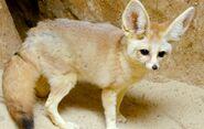 Fennec Fox (V2)